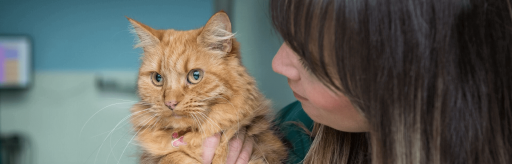 cat dentistry and dental care in London