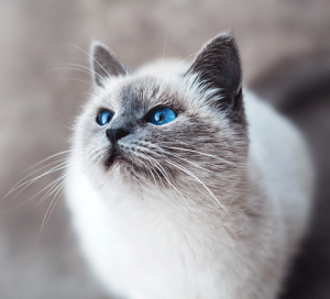 Cat Cover 101 - Vaccination - Goddard Veterinary Group