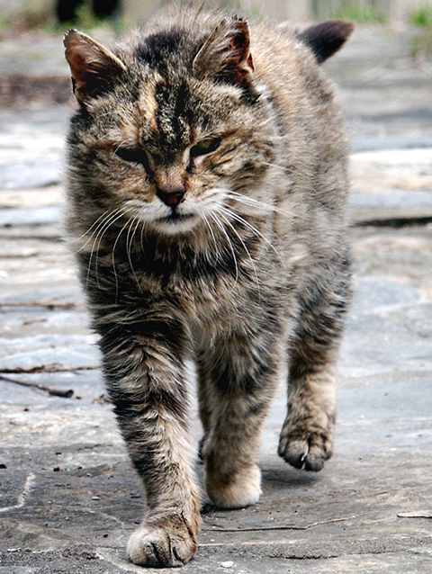 What Is Ckd In Cats Goddard Veterinary Group