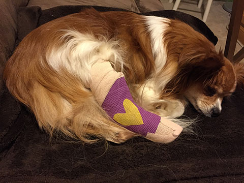 If My Dog Breaks His Leg Will He Be In A Cast Goddard Veterinary Group