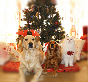 952d900c22c2b How to have a Pet-Friendly Christmas - Goddard Veterinary Group