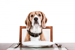 Can I Share Food With My Pet?