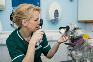 How can regular check-ups benefit my pet?
