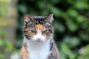 My Cat's been Diagnosed with Hyperthyroidism – What Next?
