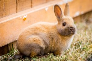 Rabbit Vaccinations – Are they necessary?