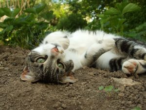 Cat laying on the ground