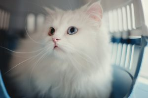 stress_free_vet_visits_for_your_cat
