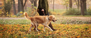 Tips on exercising your pet