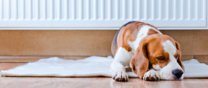 BVA tips to keep your pets safe this winter