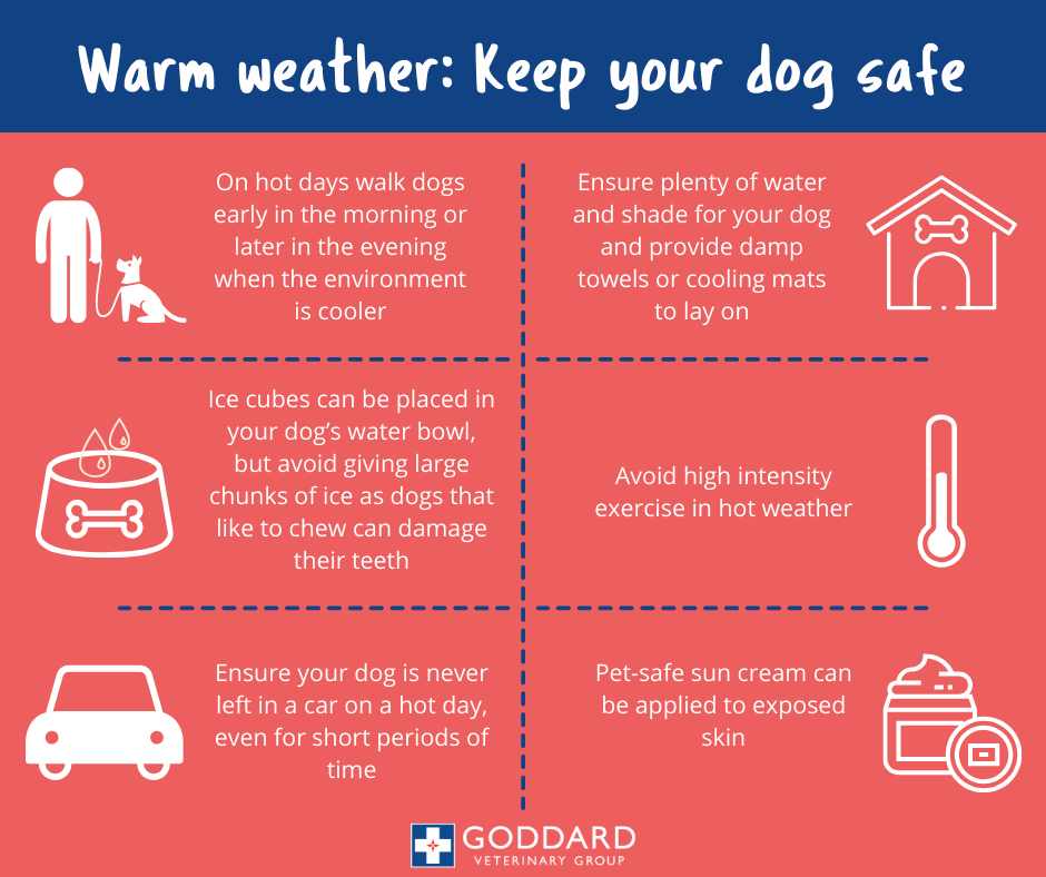 Tips on keeping your dog safe during warm weather