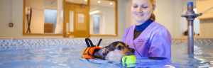 Goddard Vet Group Hydrotherapy Service for Pets