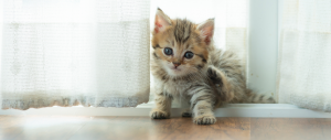 Tips for looking after new kittens