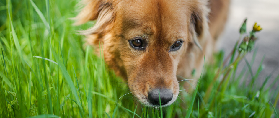 keep your pet safe this summer footer