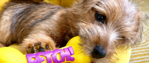 Nacho-june-blog-tips-on-welcoming-a-puppy-to-your-home-body