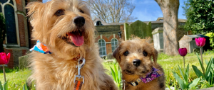 Nacho june blog tips on welcoming a puppy to your home hero