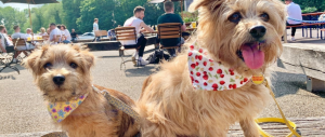 Dog Friendly Pubs in London